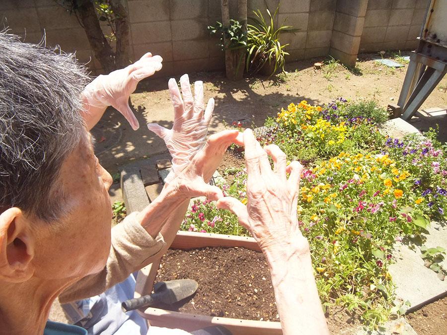 庭にひまわりの種を植えた写真